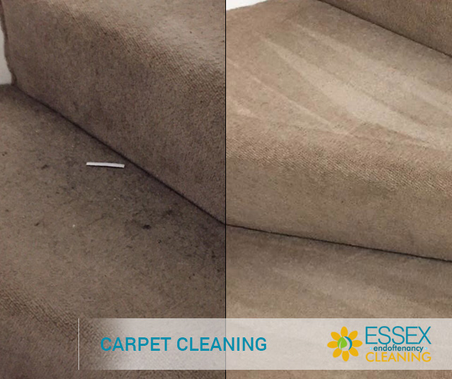 image of carpet cleaning in essex